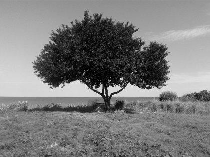 cp  tree of wisdom